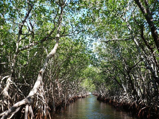 mangroves-105646_640